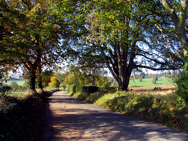 Dappled Country Lane (Photo: Pam Brophy Wikimedia CC)
