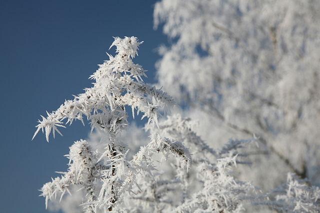 Frosty (Image: Daniel Schwen Wikimedia CC)