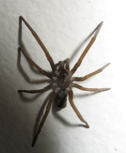 The Spider (looked a bit like this one!) (Image: tehsma Flickr CC)