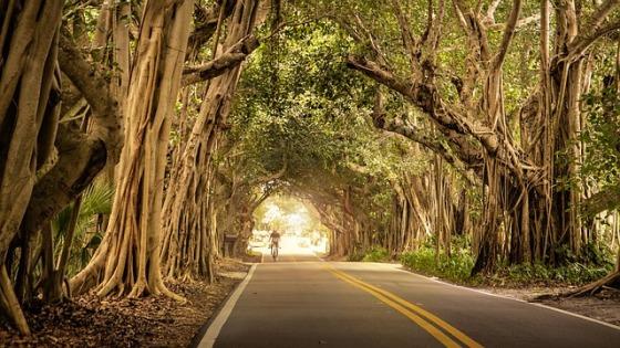 Quality Roads