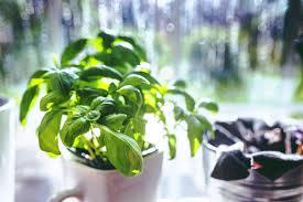 Herbs. Not mine... (Image: pexels)